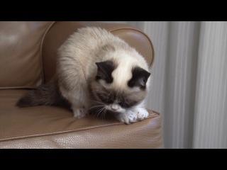 Сердитый кот рассказывает о себе